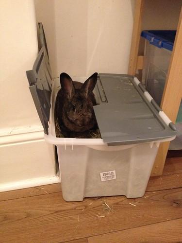 Oscar in hay box (1)