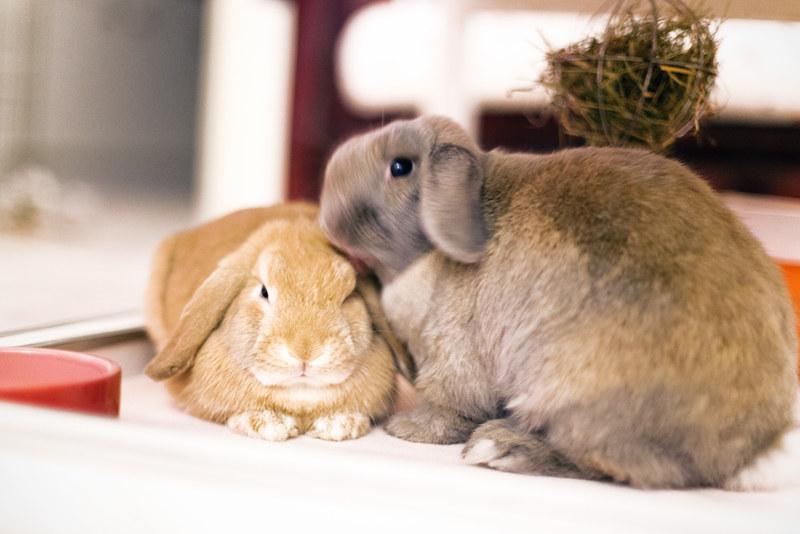 Bunny Snapshots