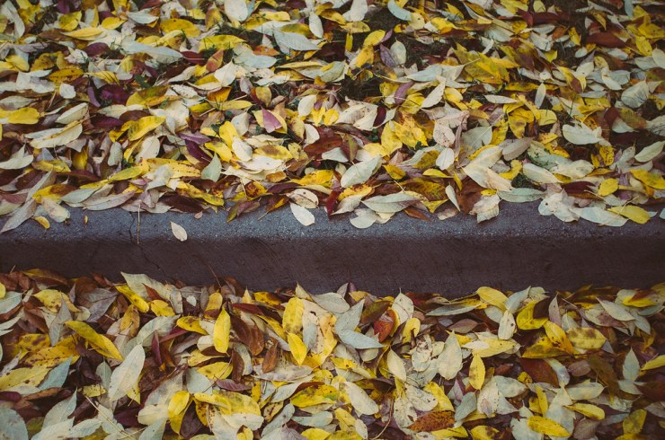 Leaves and Curb