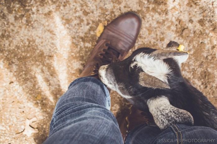 goat chew grant's farm petting pet zoo