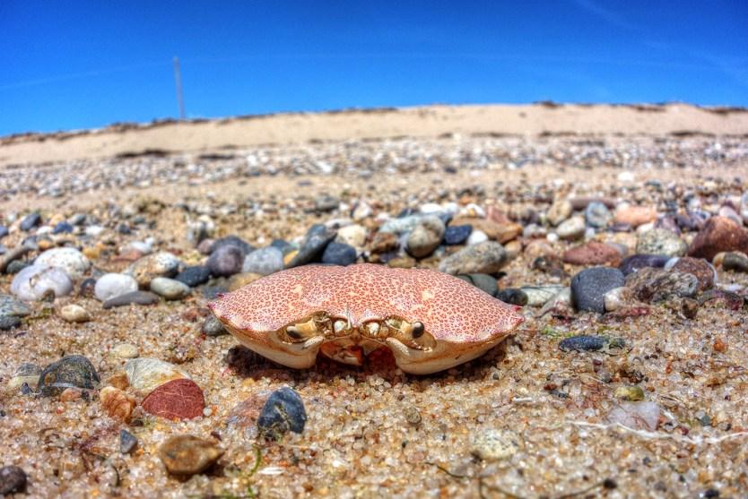 What's left of Mr Crab.