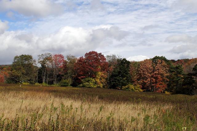 20141004_Cranberry_Wilderness_Area_039