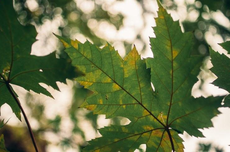 Leaf and Bokeh