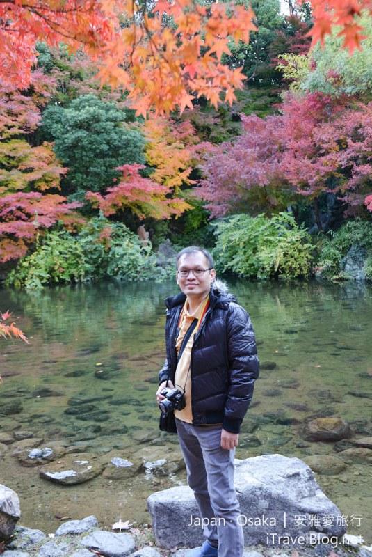 大阪赏枫 万博纪念公园 红叶庭园 36