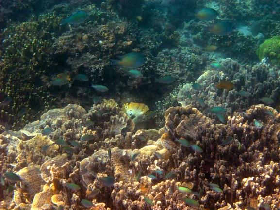 Snorkeling at Marungas Island