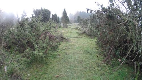 Miljöbild från Domänreservatet i Hörröd
