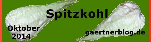 Garten-Koch-Event Oktober: Spitzkohl [31.10.2014]