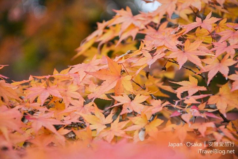 大阪赏枫 万博纪念公园 红叶庭园 18