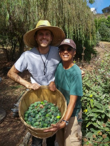 Harvesting pineapple guavas at Alemany Farm