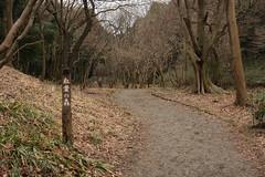 四季の森公園の紅葉の森(Forest of colored leaves at Shikinomori park, Japan)