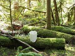 LTER: Log Decomposition Site