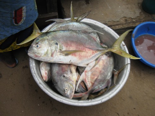 Fish in a basin