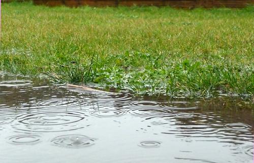 Rain rain rain ....
