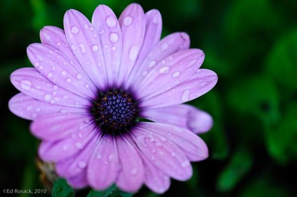 Intense flower 1