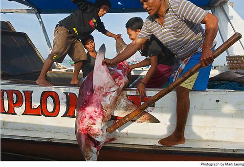 国家地理:亚洲的野生动物贸易 | Jandan.net