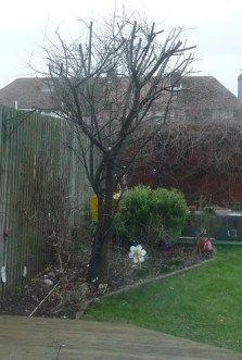 Pruning the Plum Tree