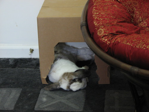 betsy flopped napping