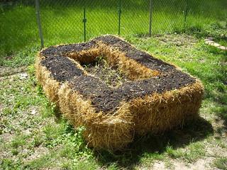 Planted Straw Bale Garden