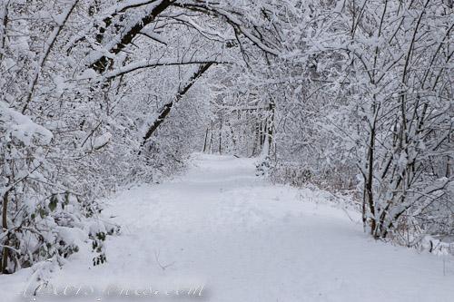 El bosque de nieve