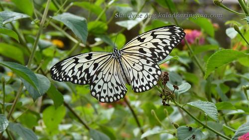 Butterfly Farm in Puerto Princesa 15