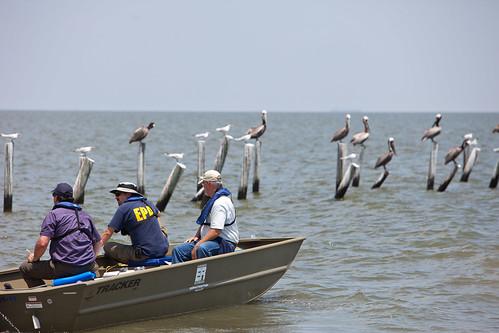 EPA Employees Observe Sea Birds in Dauphin Island