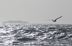 Gliding ...