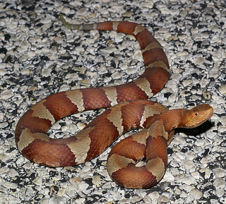 Copperhead, Texas