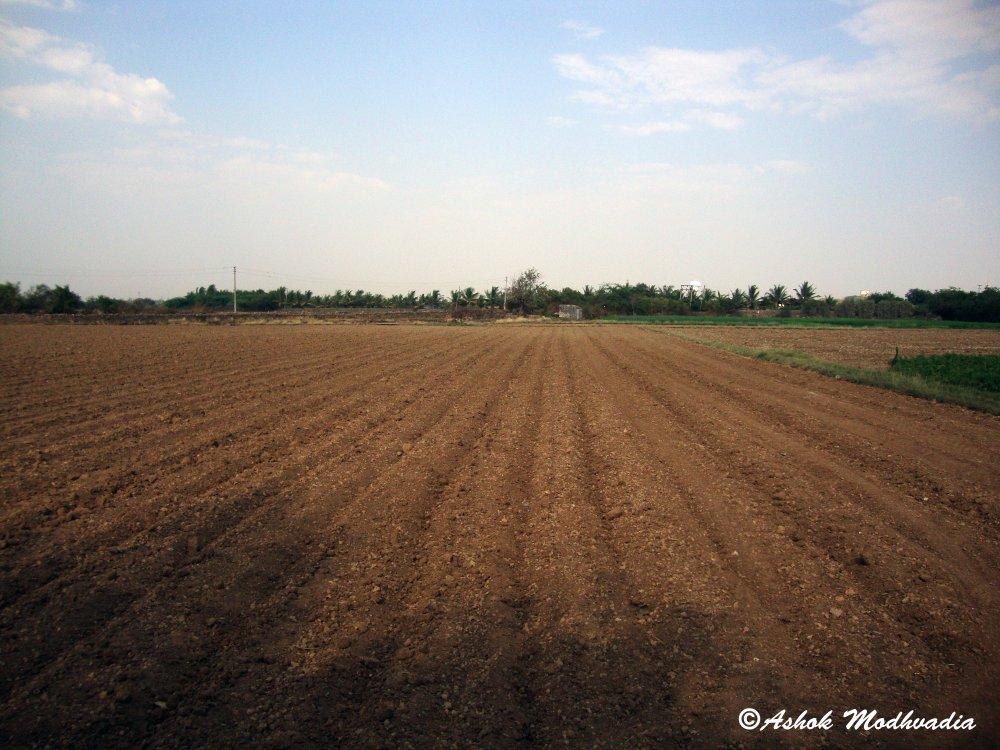 Farm 01
