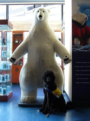 Yankee in CN-toren bij een ijsbeer