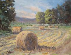 Hay Fields - 11x14