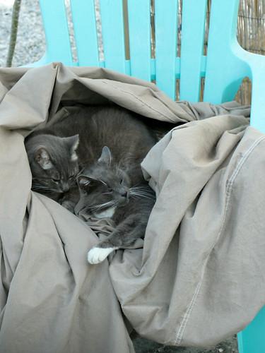 Snuggle-Cats