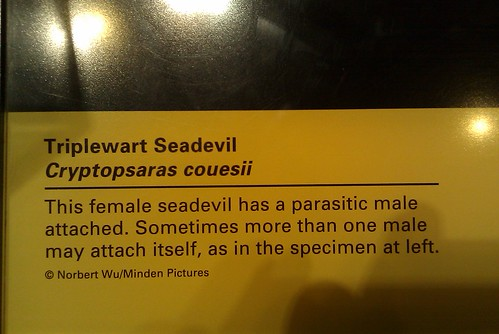 """""""Parasitic Male Attached"""""""
