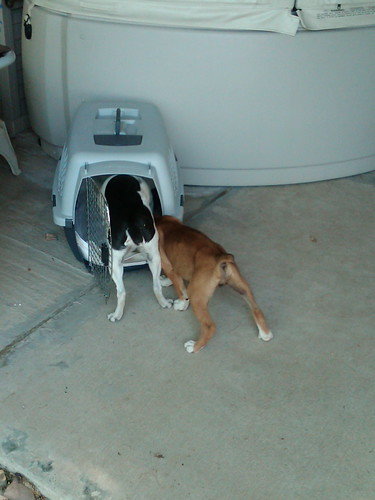 Monte and Daisy checking out Daisy's crate