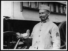 Franco-British carrier pigeon which makes long...