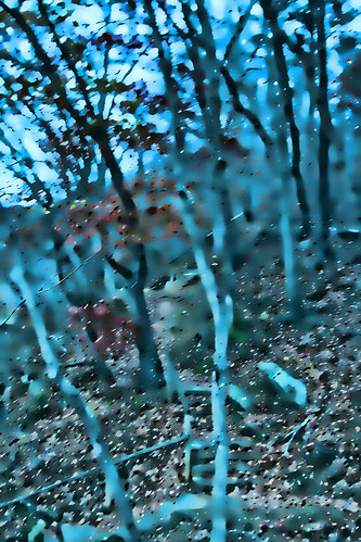 Abstract Forest Dream