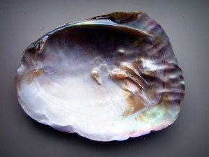 schelp