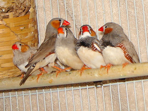 Rescued finches