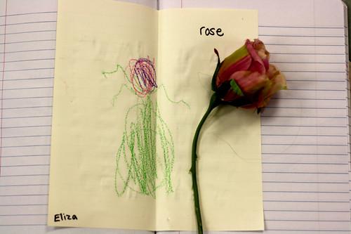 still life flower drawing - 09