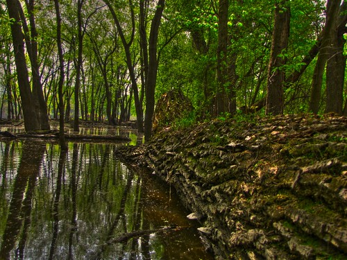 Flooded Forest High Dynamic Range