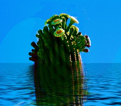 Flooded Cactus Crown