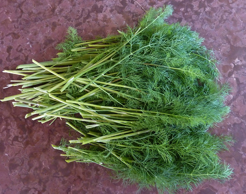 dill ready for drying