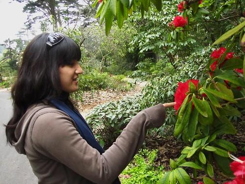 sf botanical garden - gaby & rhododendron