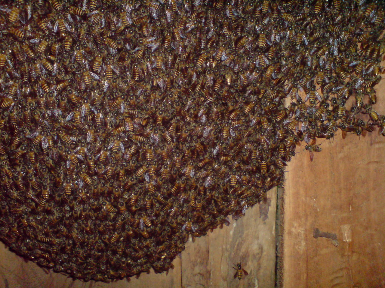 Migrating Honey Bee Kingdom