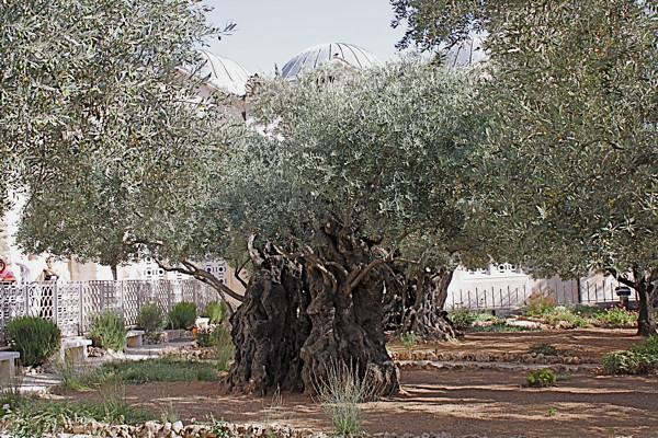 gethsemane_4.JPG