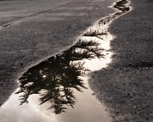 Puddle Reflection 9738