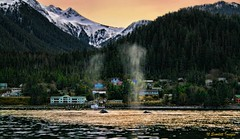 Whales in a Sitka Sunset
