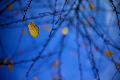 Autumn_Leaves-2010-076