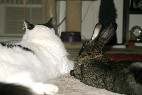 Kitty & Bunny