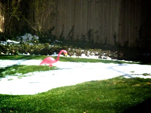 flamingo on a snow island