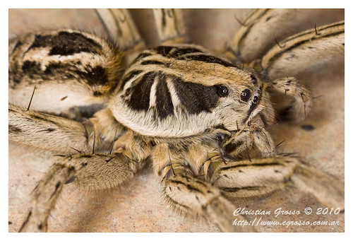 "Araña • <a style=""font-size:0.8em;"" href=""http://www.flickr.com/photos/20681585@N05/4518340990/"" target=""_blank"">View on Flickr</a>"